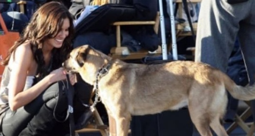 Unseen Animal Loving Pictures Of Daniela Ruah