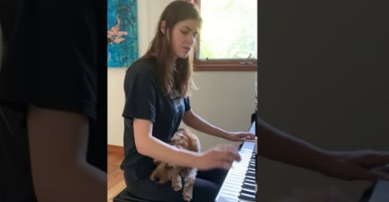Latest Saturday Piano Amusement Of Alexandra Daddario